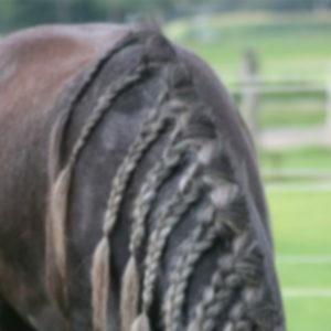 Verzorging van het paard