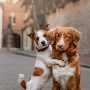 Honden/ verzorging
